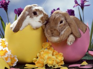 Happy-Easter-babies-pets-and-animals-21354549-1024-768